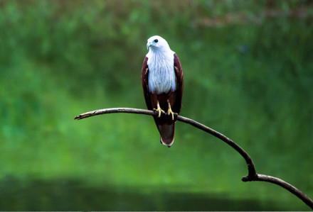 Thattekkad Bird Santuray