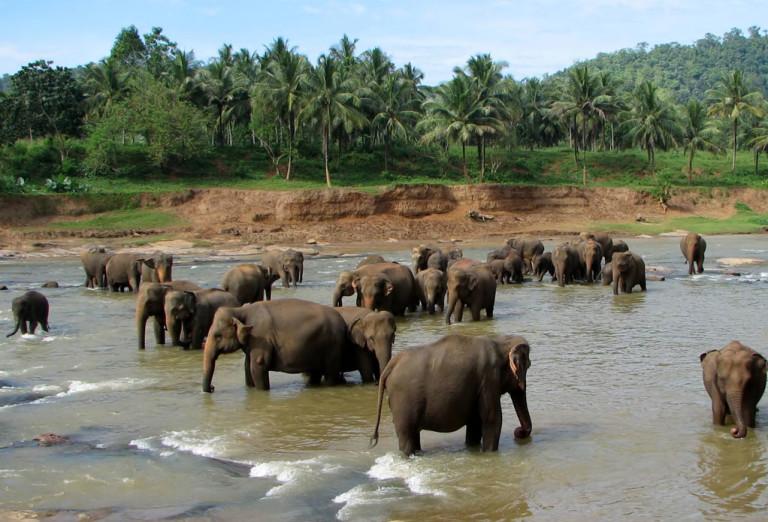 kegalle elephant orphanage